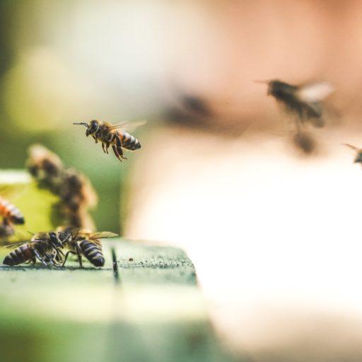 Auf diesem Bild sieht man Bienen.