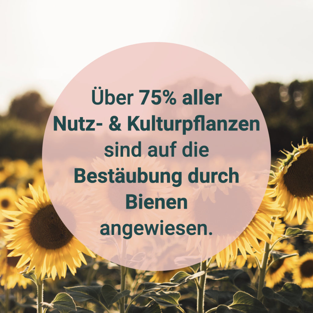 """Auf diesen Bild sieht man den Text """"Über 75% aller Nutz-&Kulturpflanzen sind auf die Bestäubung durch Bienen angewiesen."""""""