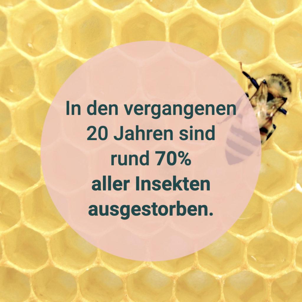 """Auf diesem Bild sieht man den Text """"In den vergangenen 20 Jahren sind rund 70% aller Insekten ausgestorben."""""""